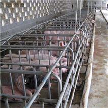 養豬舍配件 多種規格 復合板母豬定位欄