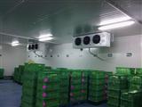 蒜苔保鲜冷库安装工程造价是多少?