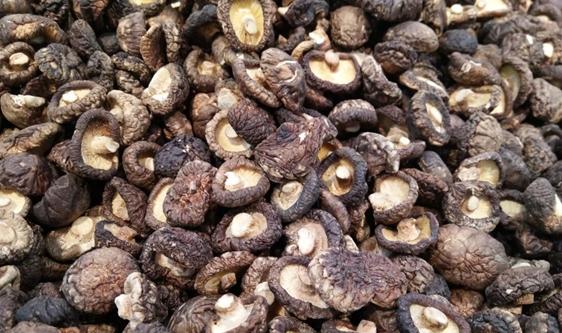 食品干燥工艺源远流长 机械创新改善生产质量