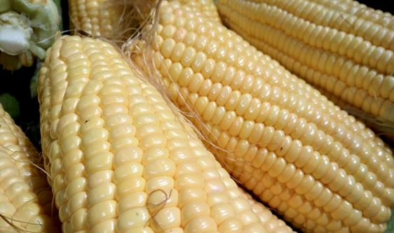 """鲜食玉米成餐桌""""新贵""""真空包装、冷链释放产业动能"""
