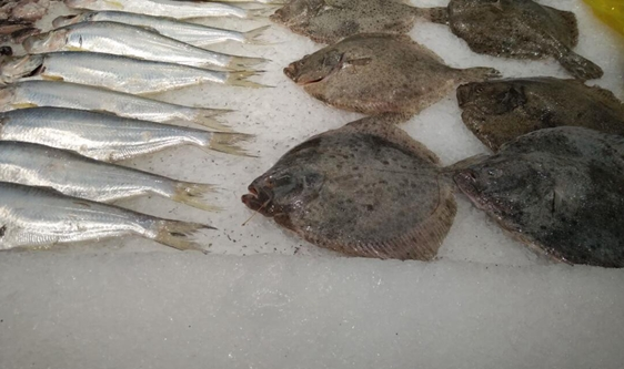 冷凍冷藏食品排查行動進行中 冷庫規范使用成重點