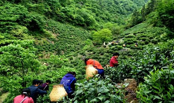 茶叶加工机械行业榜单发布 10家食机企业榜上有名