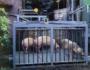 2吨地上衡,2吨猪用地磅,2吨电子畜牧磅秤