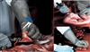 TM550猪肉槽头肉修整器